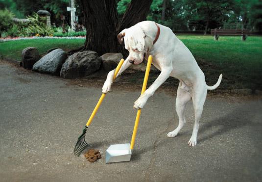 Opgevoede hond