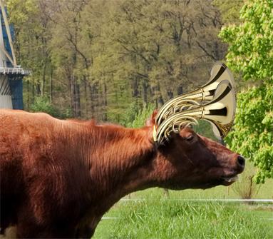 Koe-Hoorns